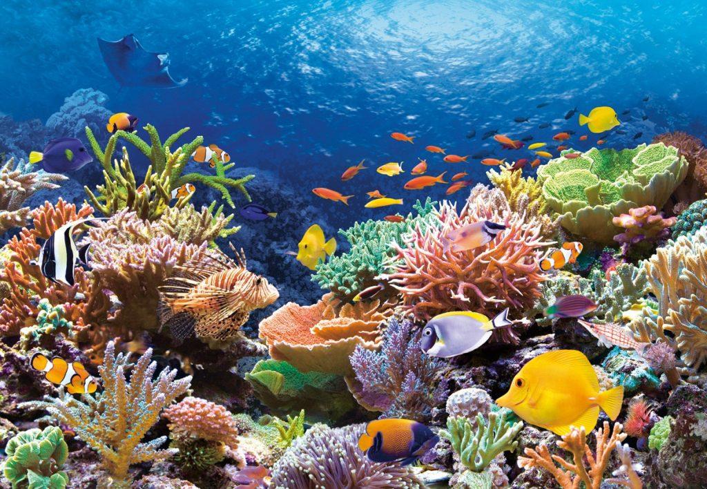 красивые коралловые рифу