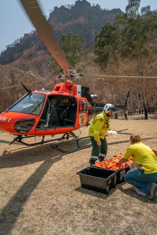 вертолет с морковкой