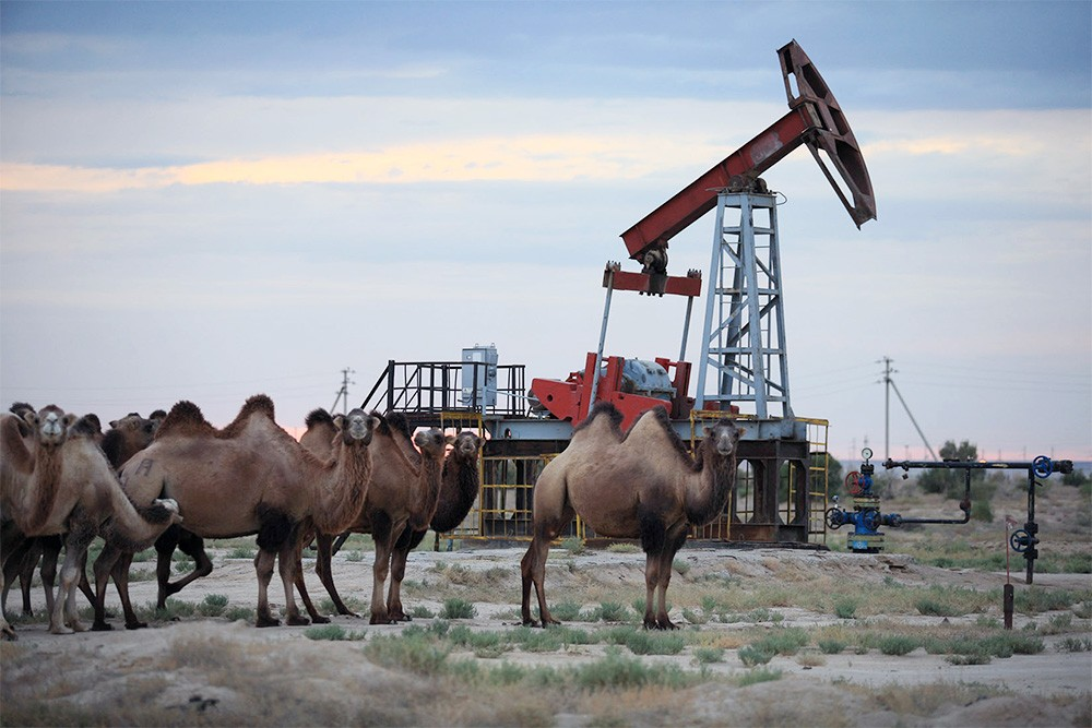 Нефтяная вышка и верблюды