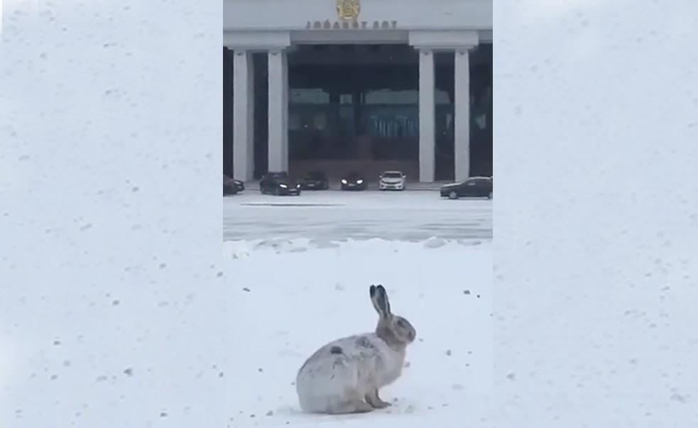 Заяц «вышел на одиночный пикет» в Нур-Султане