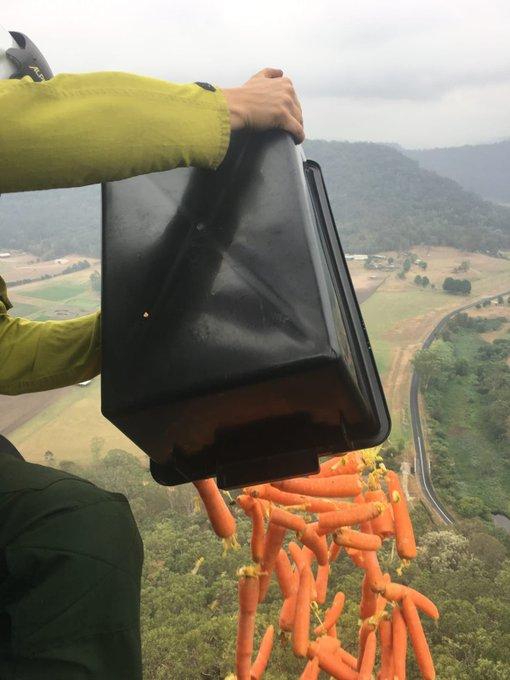 морковку кидают с воздуха