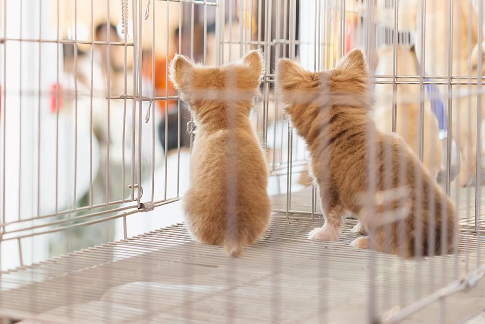 котята в клетке