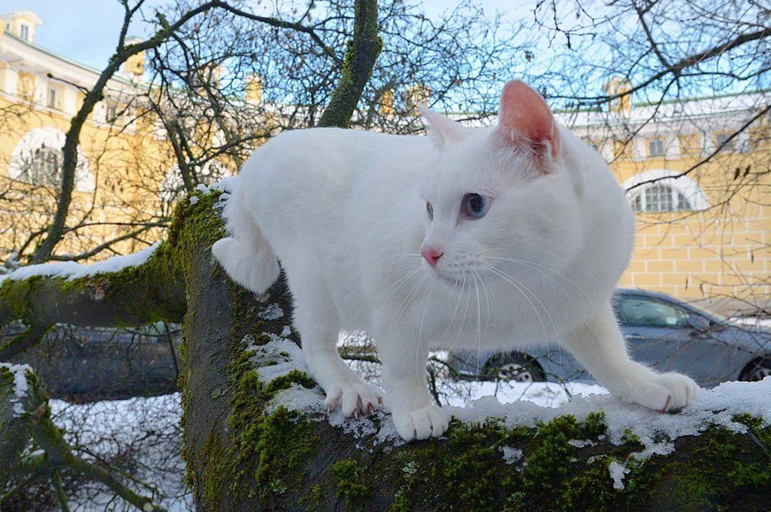 Эрмитажный кот Ахилл станет официальным оракулом Евро-2020
