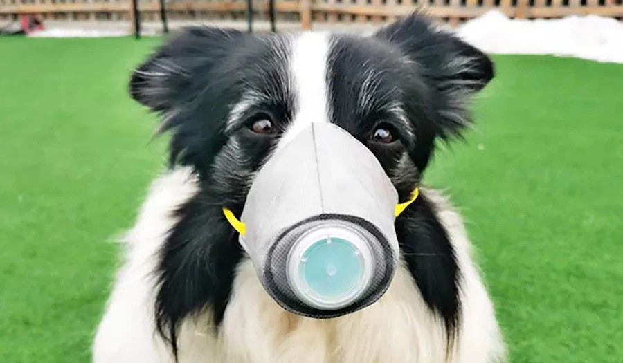2019-nCoV: Китай запасается защитными масками для животных