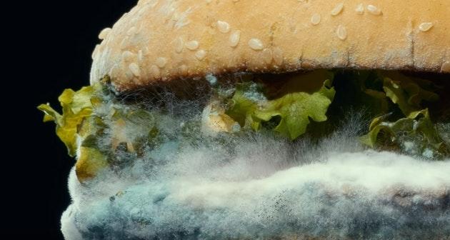 гамбургер с плесенью