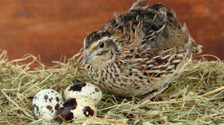 перепелка анализы на птичий грипп