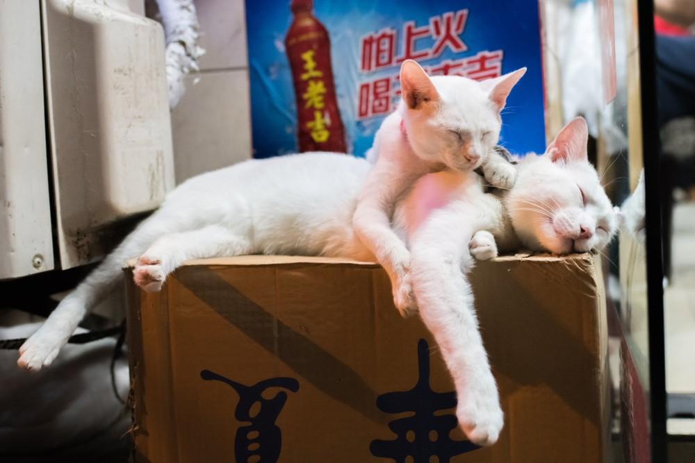 Китай запрет кошек собак