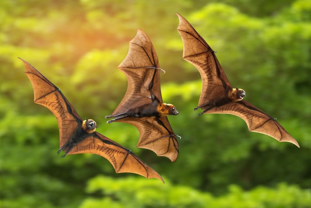 летучие мыши происхождение коронавируса
