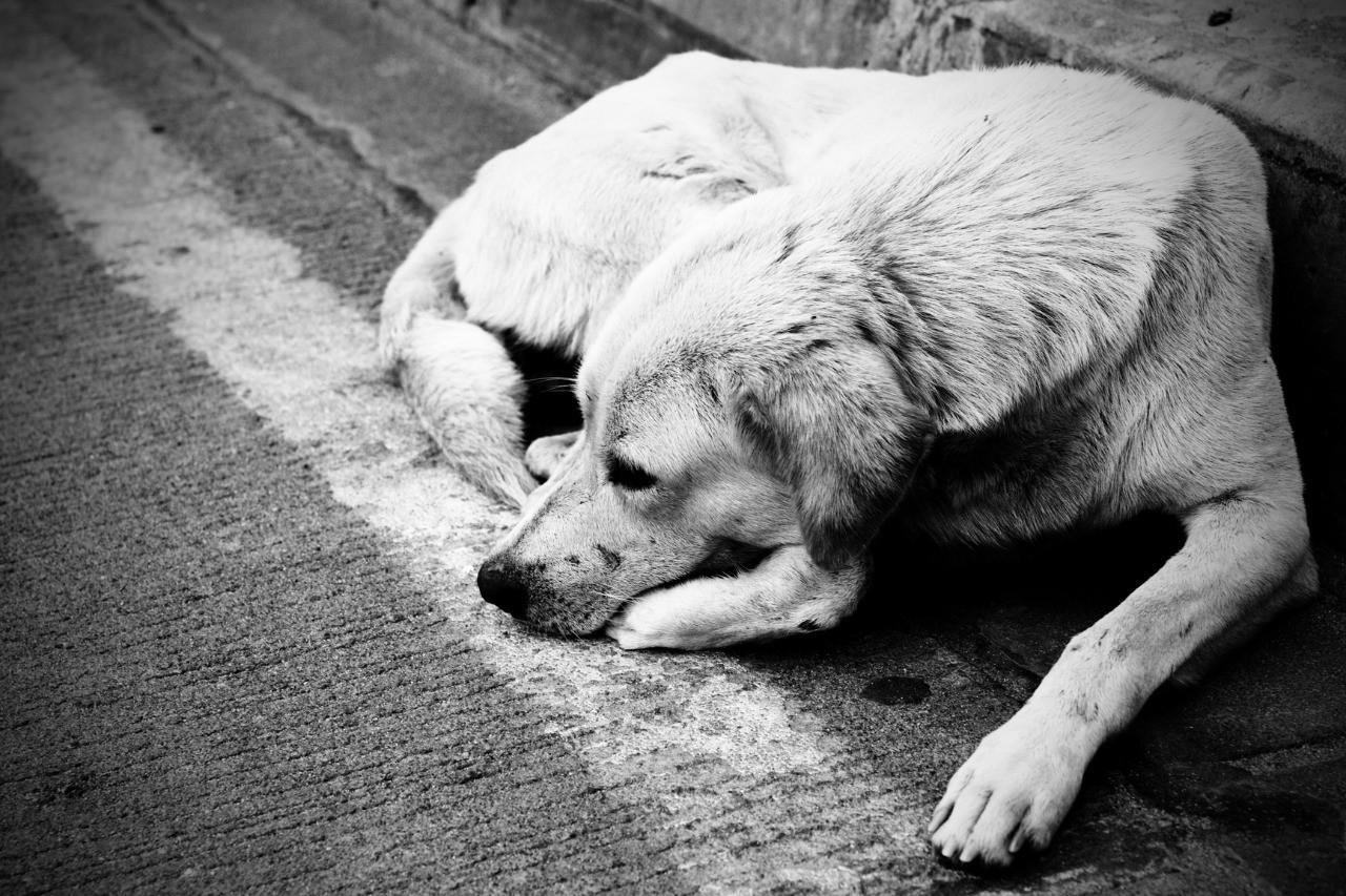В Казахстане могут ужесточить наказание за издевательства над животными