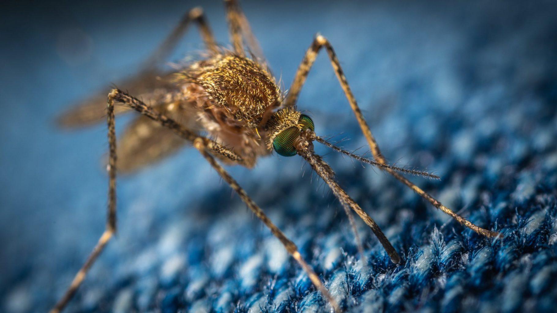 Ученые выяснили, могут ли комары переносить COVID-19
