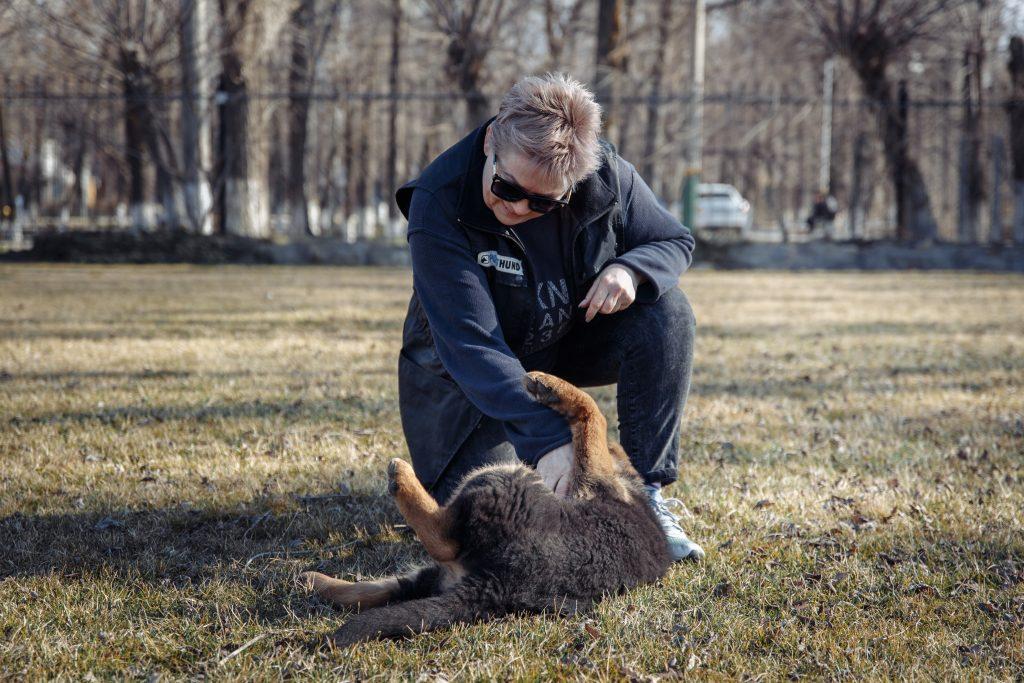 Каково это – быть национальным экспертом по немецкой овчарке