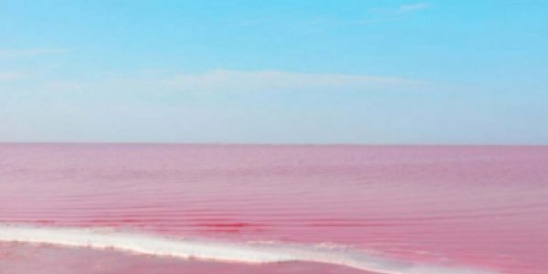 Чувство хозяина. От чего на самом деле пострадало розовое озеро Кобейтуз?