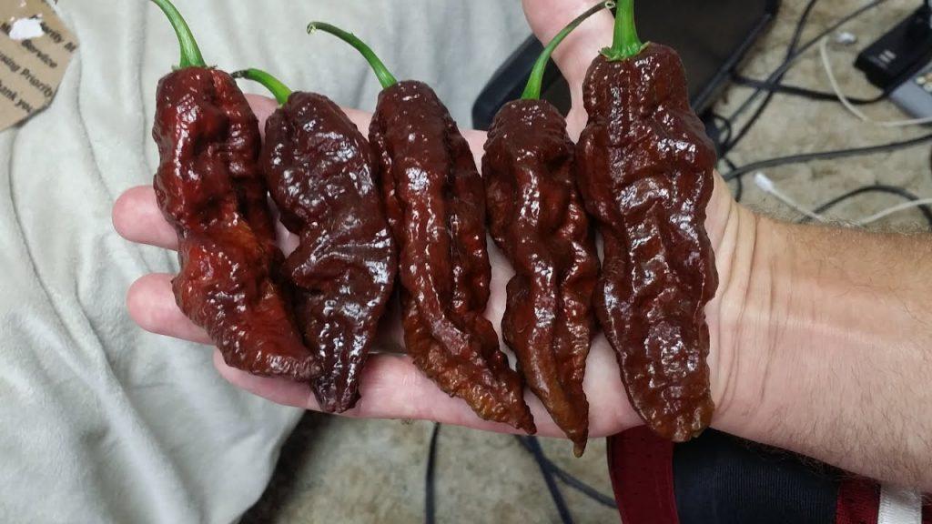 Еда настоящих мужчин: 5 самых острых перцев в мире