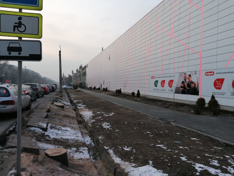 Токаев взял на контроль ситуацию с вырубленными деревьями в Алматы