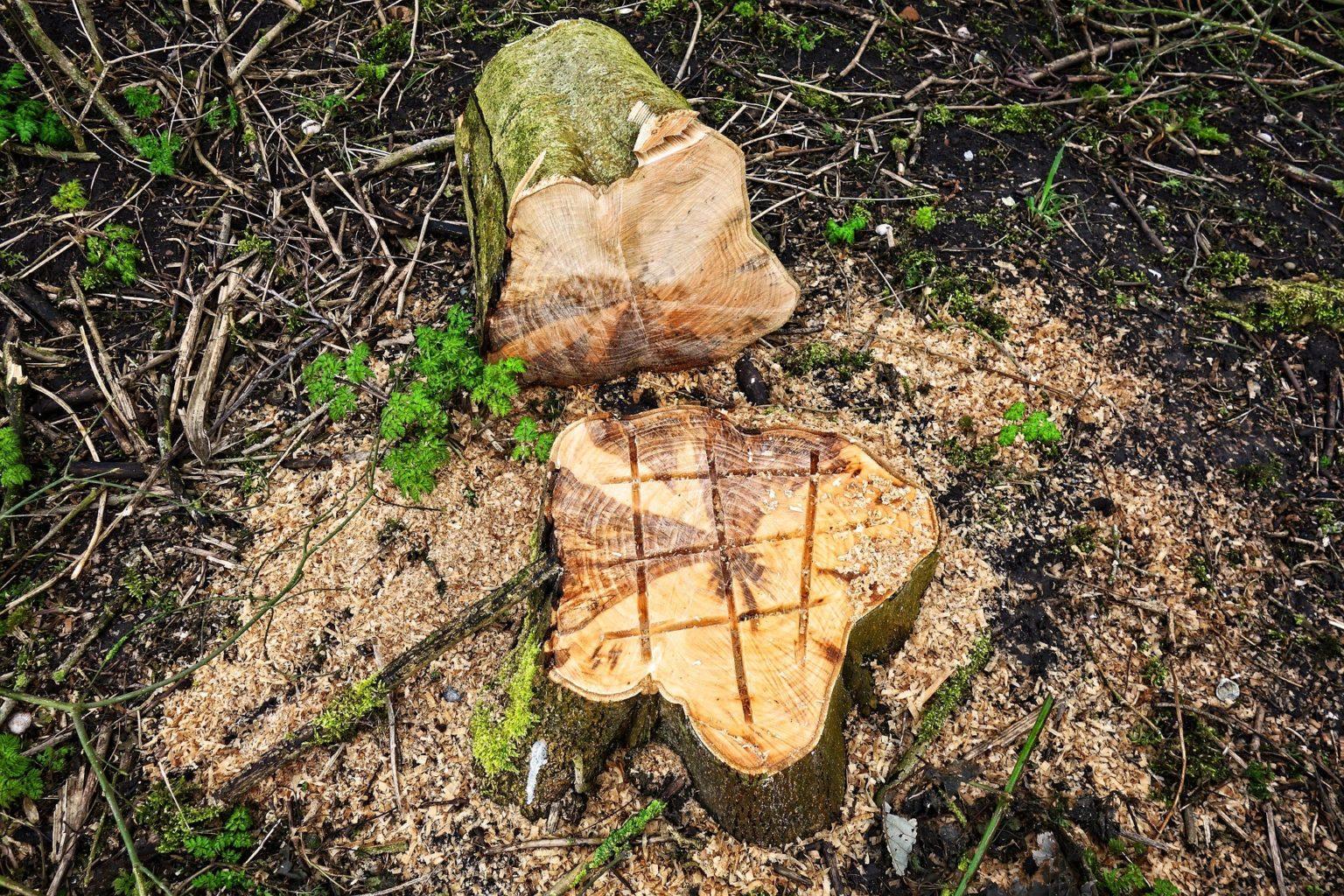 В РК увеличат штраф за вырубку деревьев