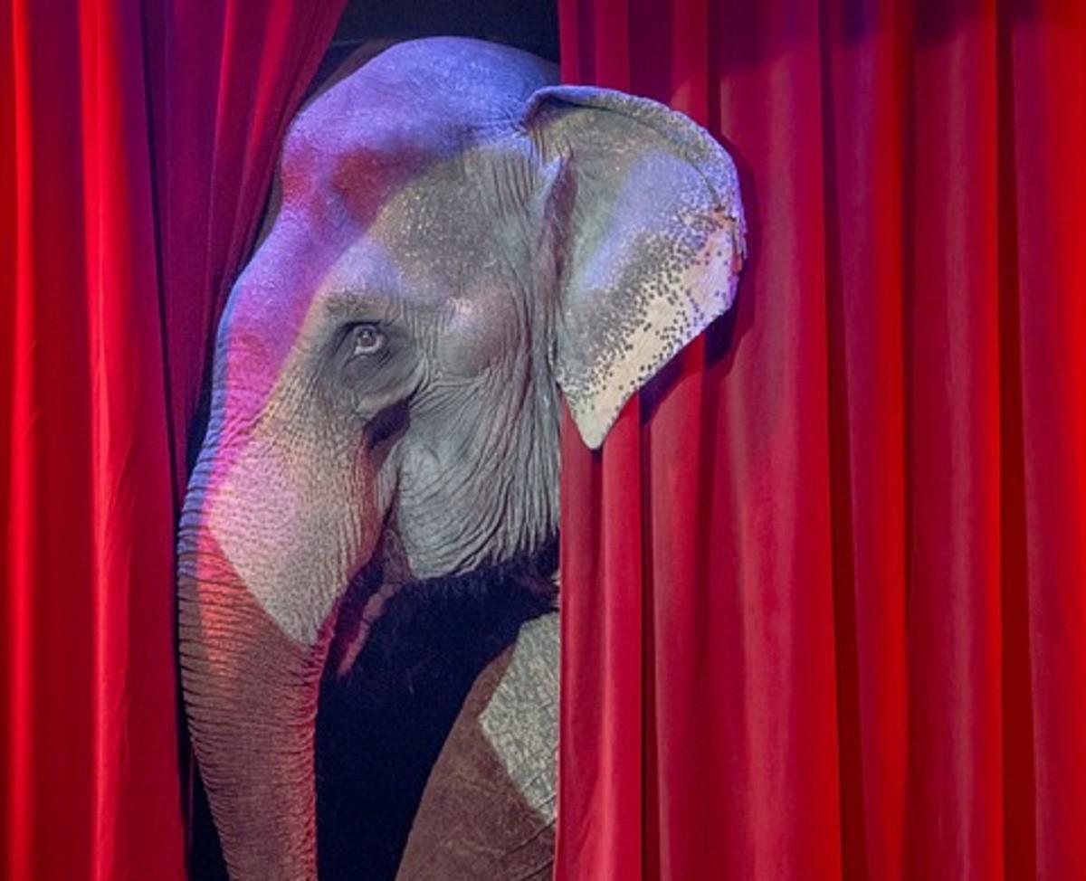 Шымкентский цирк отказался от животных