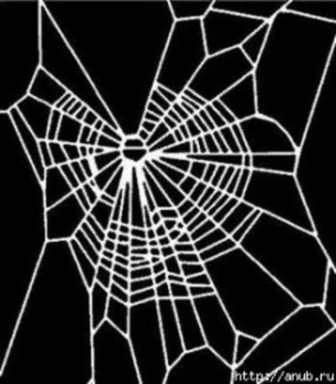 Эксперимент: какие паутины плетут пауки-«наркоманы»