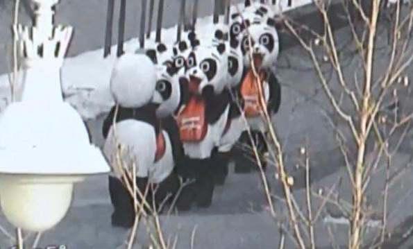 «По Арбату ходят медведи»: полиция рассказала о новогодних курьезах