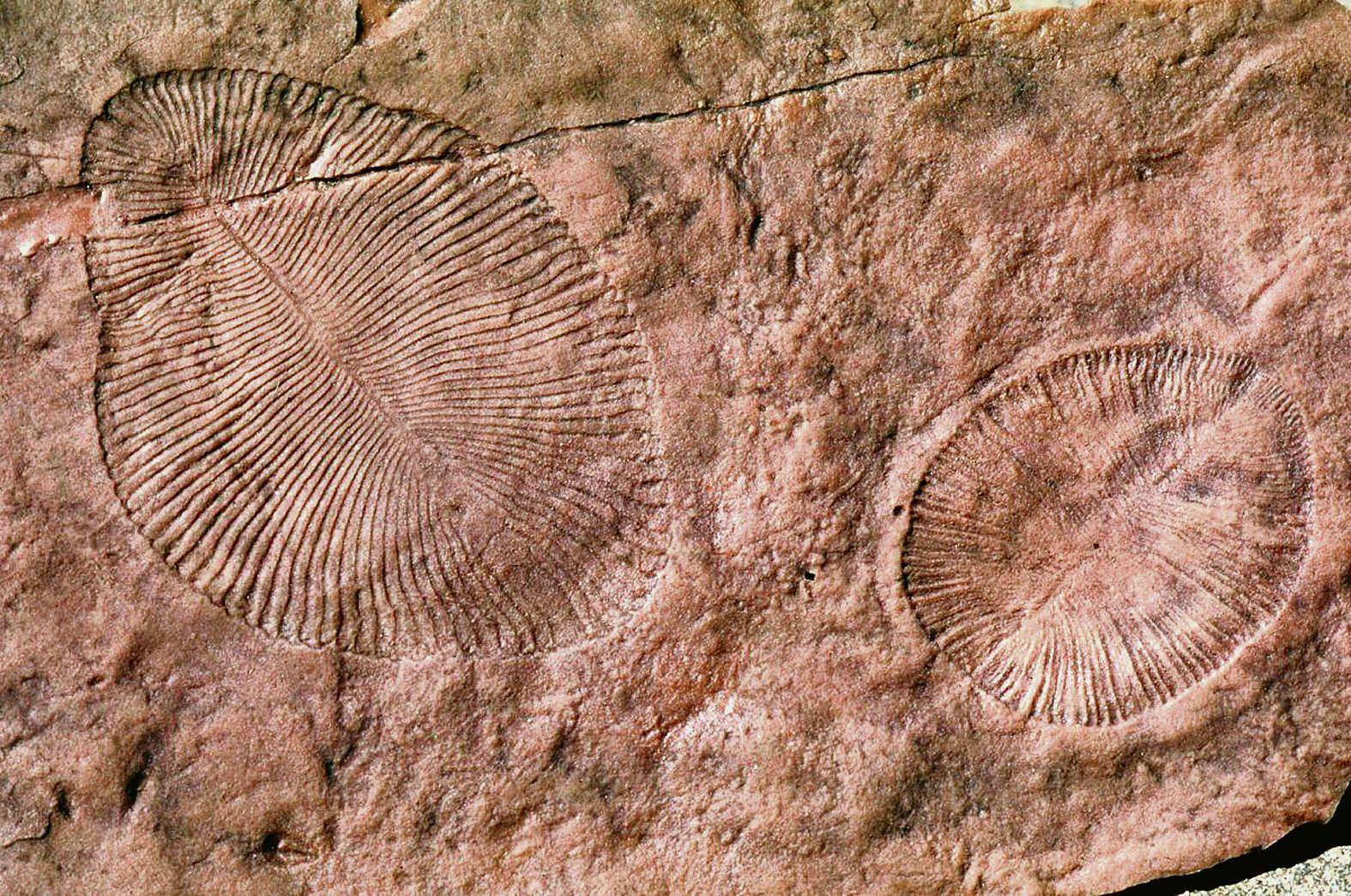 Ученые нашли сходство между людьми и странными древними существами