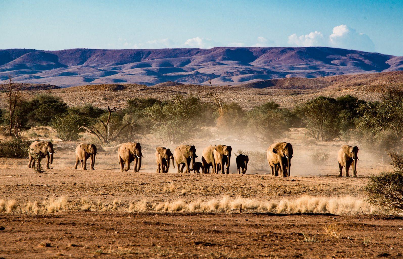 Африканские слоны отомстили браконьерам