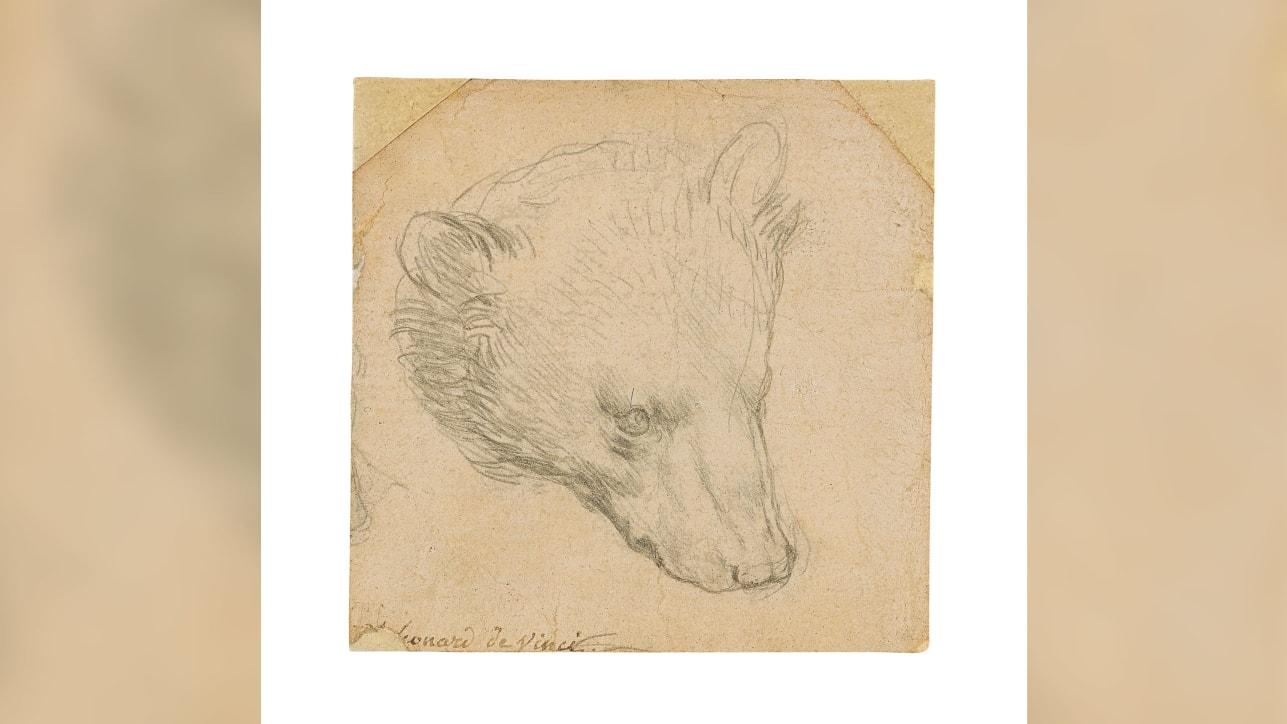Эскиз крошечного медведя Леонардо да Винчи могут продать за  млн.