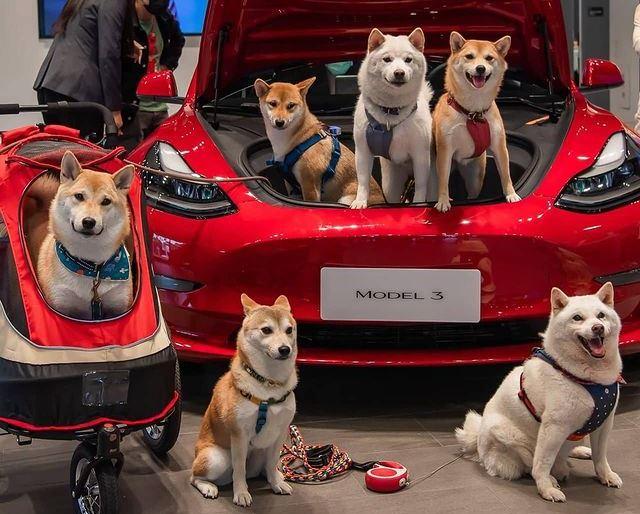 Шутка Илона Маска сделала Dogecoin лучшей инвестицией за последние полгода