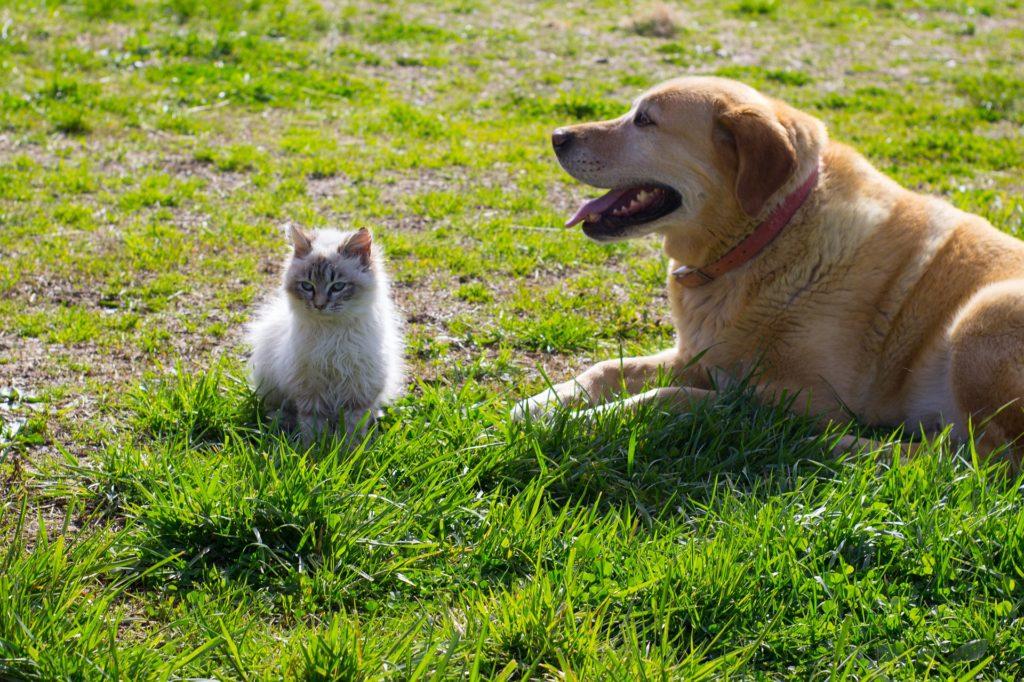 Запрет на употребление в пищу, чипирование и штрафы: что нового в законопроекте «Об ответственном обращении с животными»